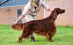 Rafferty at 5yrs 9mths taken at WKC when he was awarded the res CC