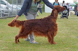Rafferty won his 6 Res CC at Windsor on Thursday ... Thank you to Jud
