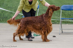 Rafferty ... Best Veteran Dog ISCW