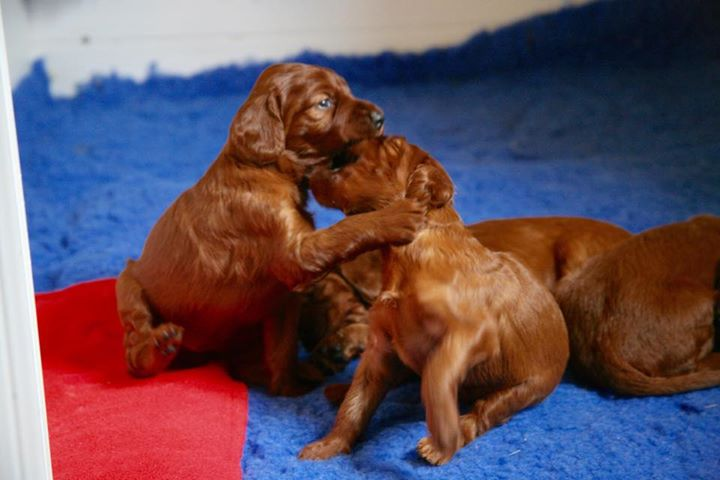 Facebook - 3 weeks old and we can play and bark !!