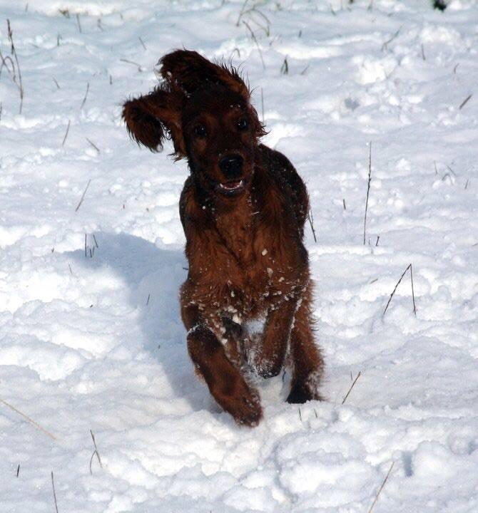 lexi puppy