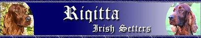 Danwish Irish Setters