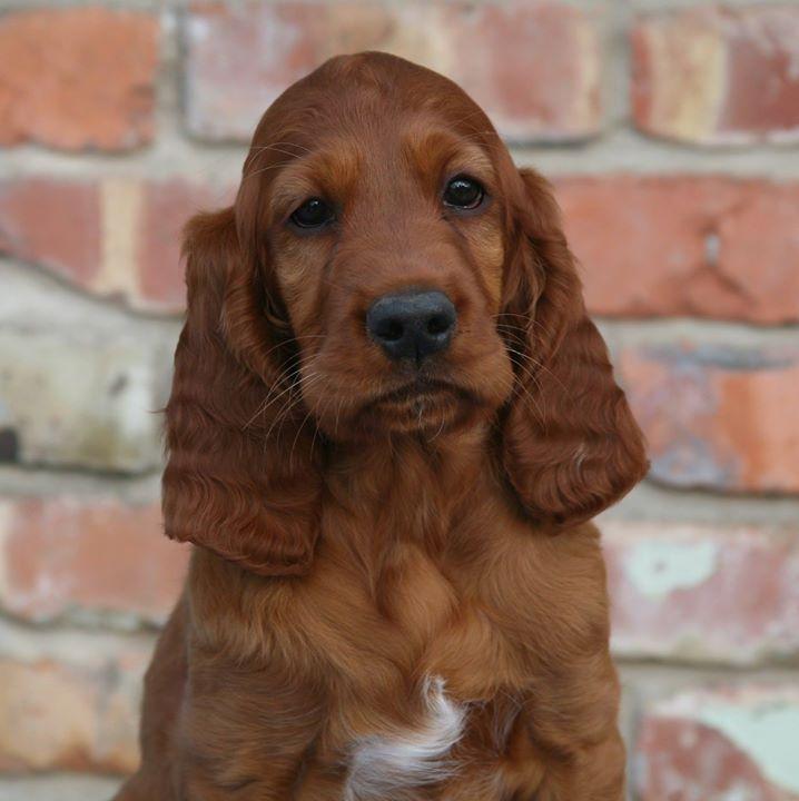 Ripley nearly 9 weeks