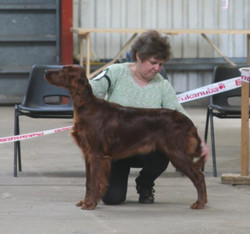 Well done Pixie & Val 3rd in puppy bitch , maiden & novice ...jpg