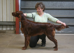 Well done Pixie & Val 3rd in puppy bitch , maiden & novice