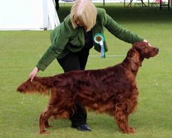 Rafferty winning dog CC at Bath Ch Show