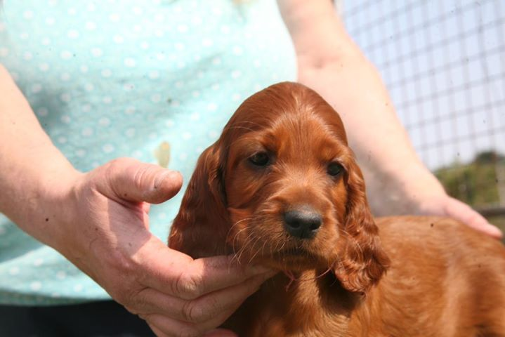 Fergal & Connie puppies