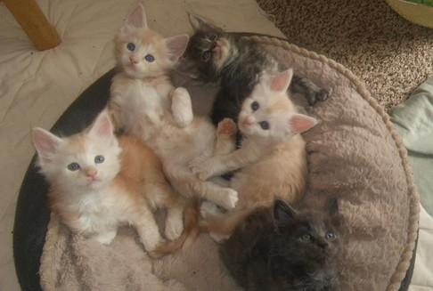Kittens in Bed 2017 (4).jpg