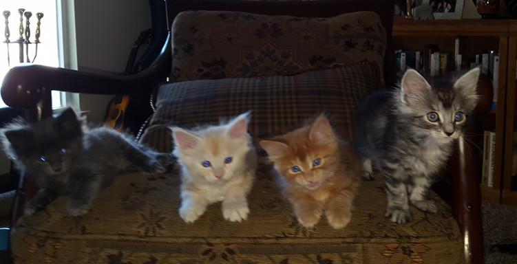 Princess Leia and 3 blurry kittens.jpg