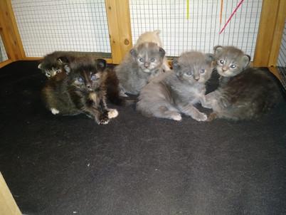 Summer Bash Kittens