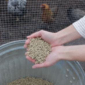 Baxter Barn Layer Pellet Feed