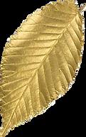 leaf4 copy.png