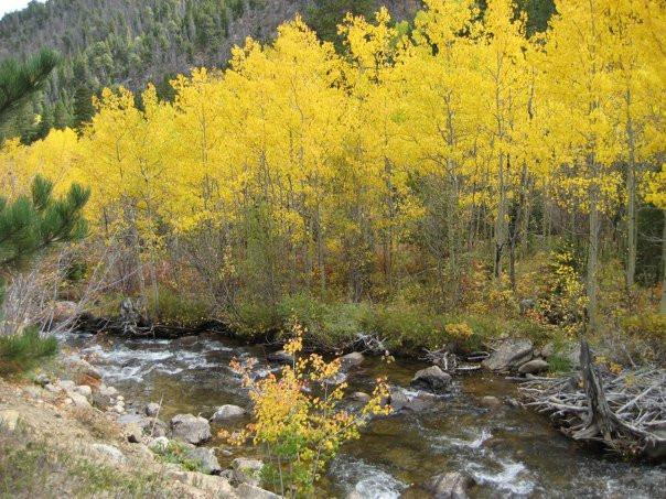 Autumn Aspen.jpg