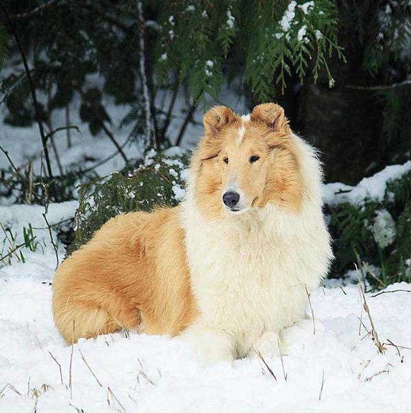 Syd snow.jpg