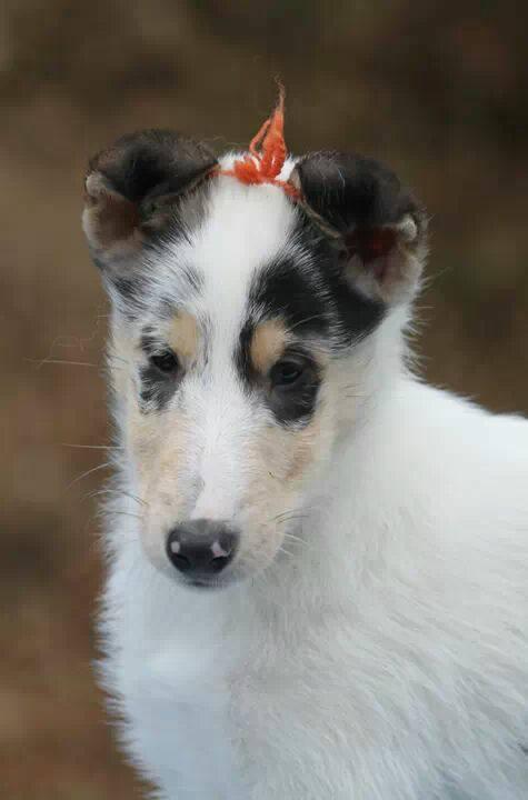 Portrait as puppy