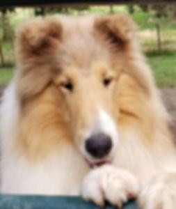 Caper face 1.jpg