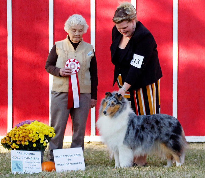 Noshi BOS California collie fanciers Nov