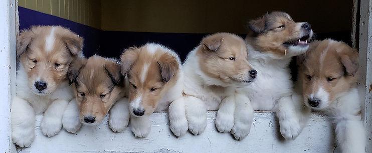 Ginger pups 1.jpg
