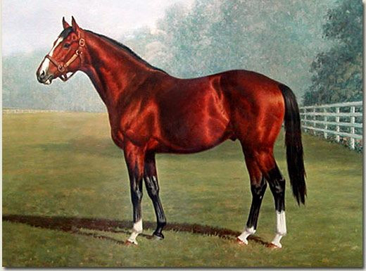1964 Kentucky Derby Winner: Northern Dancer