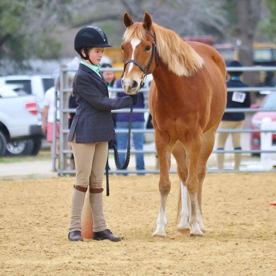 Horse Show Encouragement