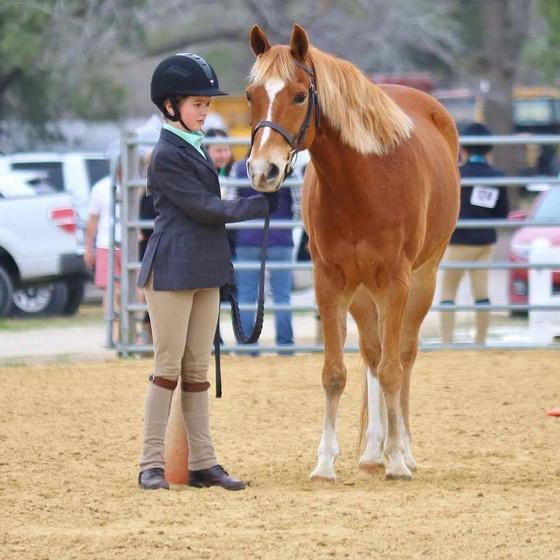 Horse Show Encouragement