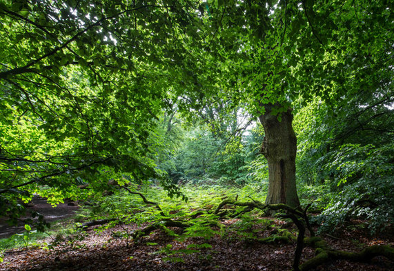 Wald  anouchka_olszewski_©