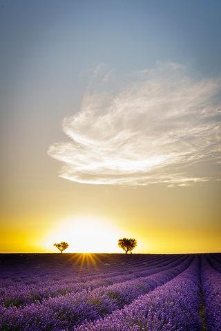 Provence  anouchka_olszewski_©