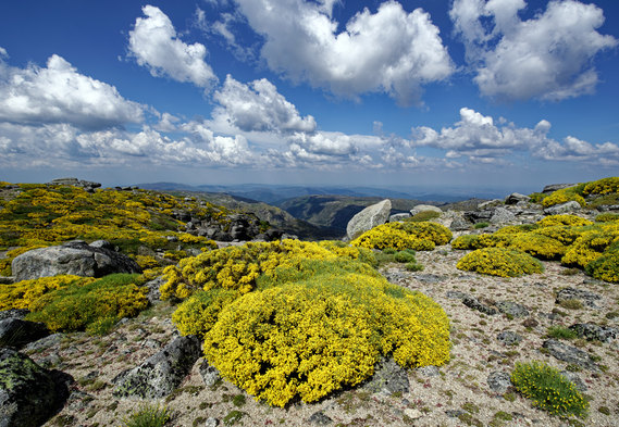 Serra Estrela-589DxO.jpg