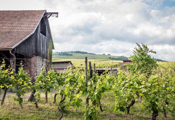 Bauernhof Weg anouchka_olszewski_©