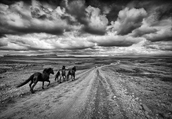 2011-07-04.8208.Icelandic_Horses_in_the_Highlands.JPG