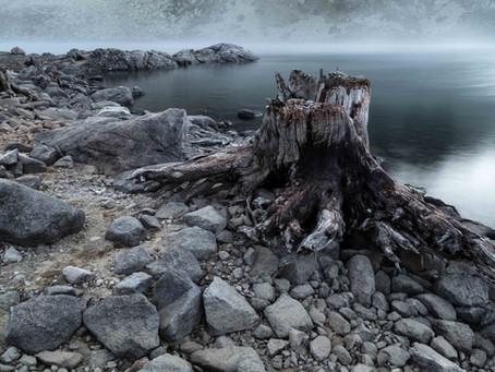 Faszinierende Naturfotografie im Winter
