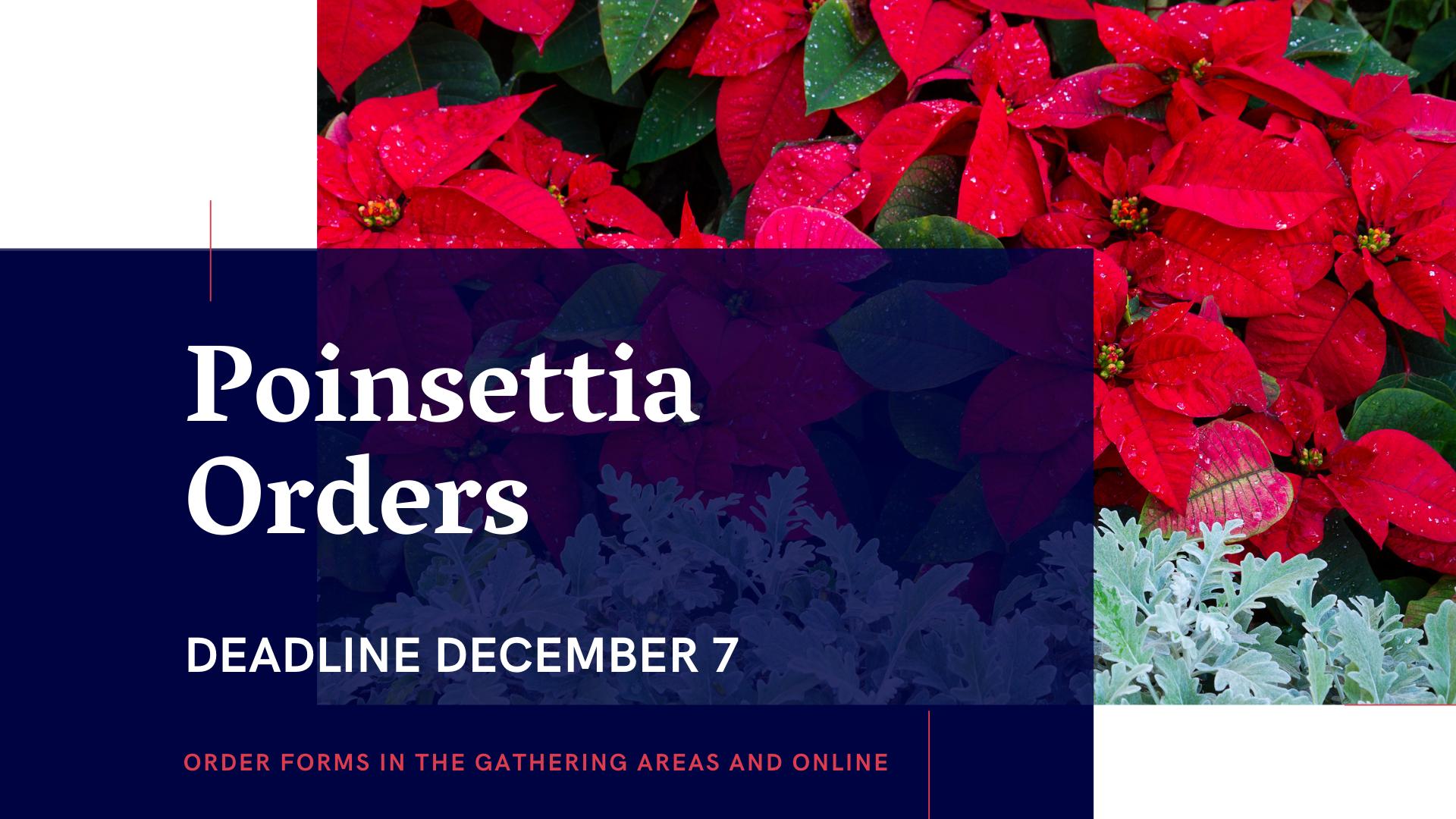 Poinsettia Orders 2020