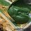 Thumbnail: HONEYSUCKLE SOAP