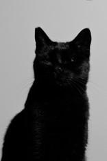 Il gatto di Paolo Assenza