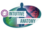 Intuitive Anatomy Logo.png