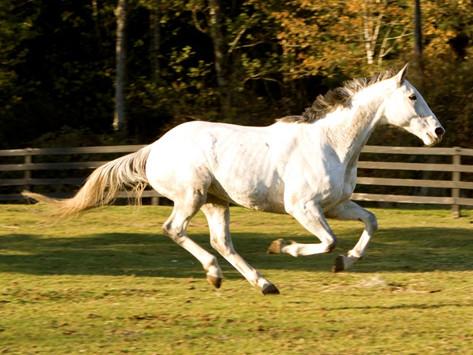 Northwest Equine Stewardship Center