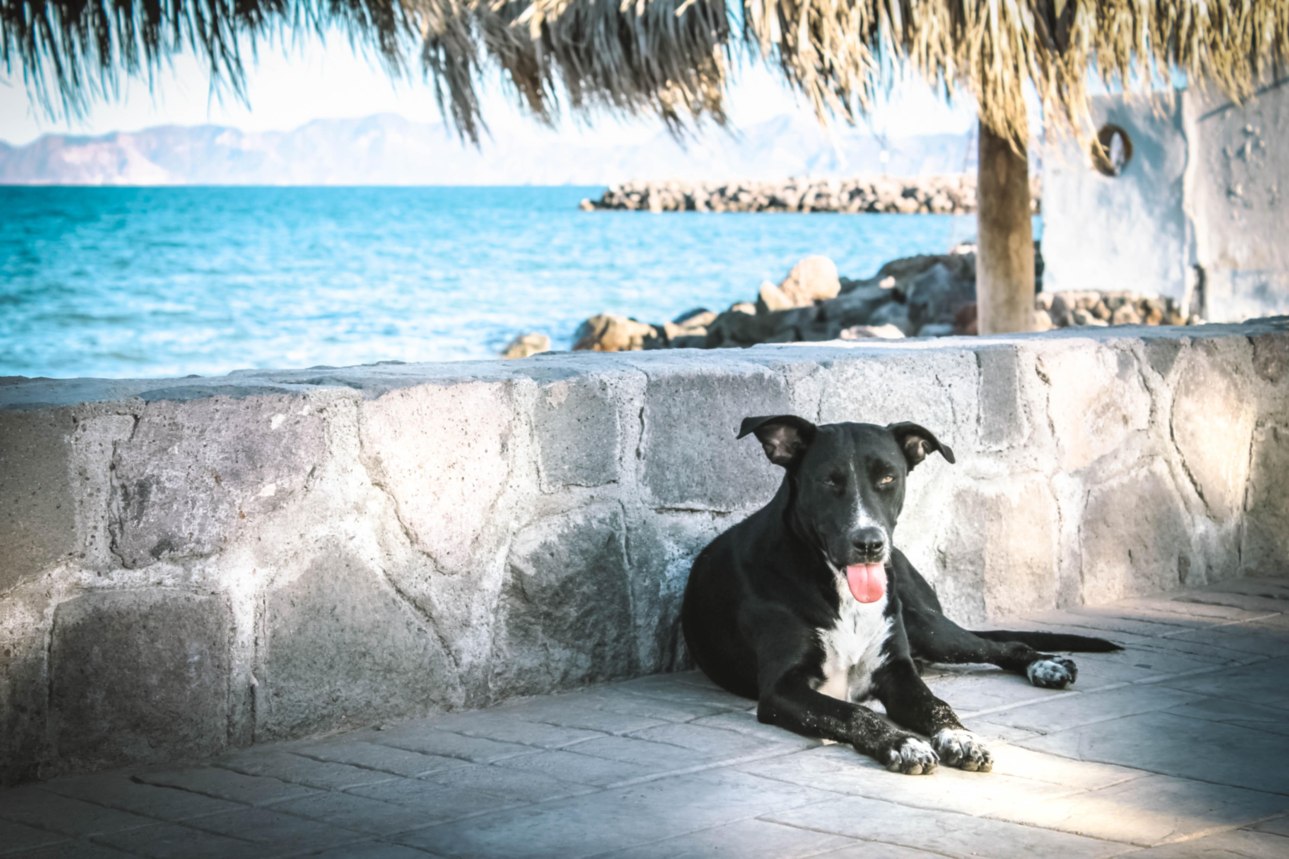 Loreto Stray Dog