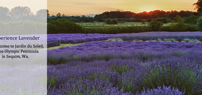 Photo Courtesy © Jardin du Soleil
