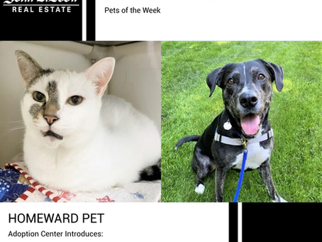Furry Friends Friday Pet of the Week! August 27, 2021