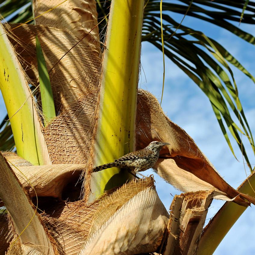 Glided Flicker in a Palm Tree