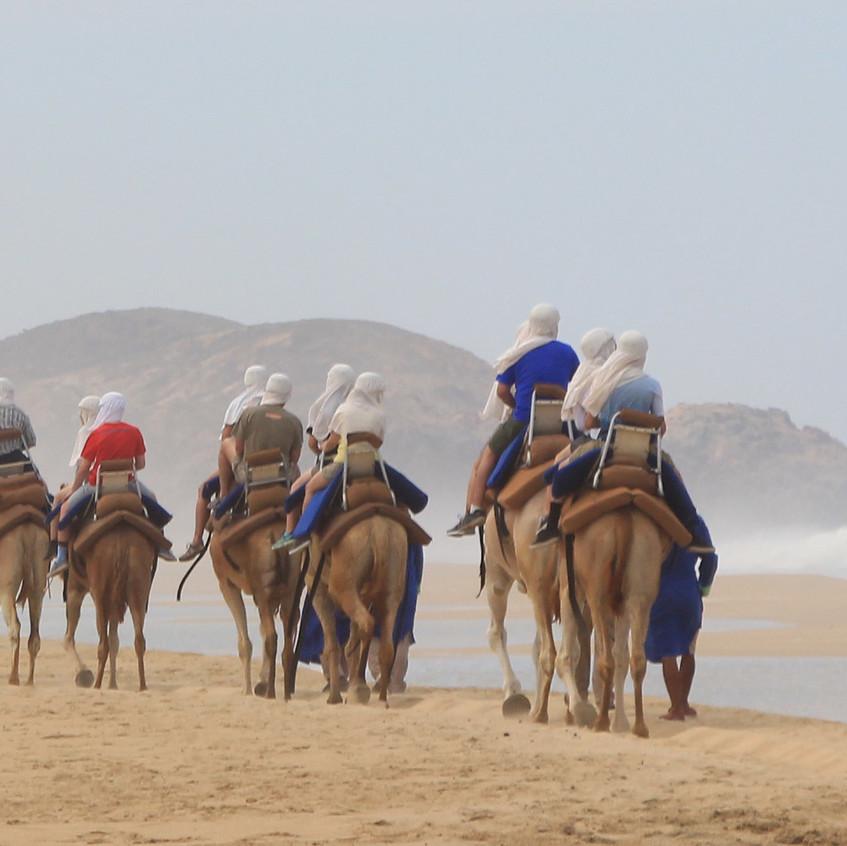 Outback & Camel Safari