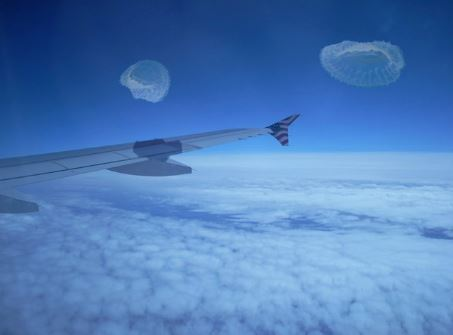 Sky jellies