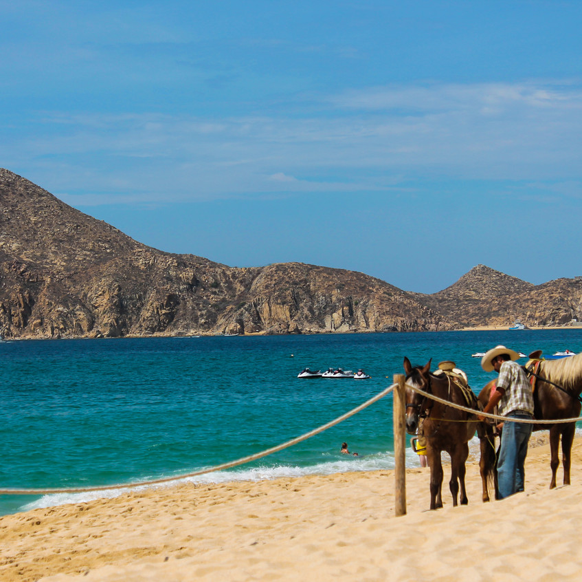 Horse rental on the beach