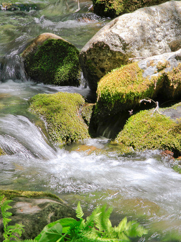 Tule River in the Giant Sequoia National