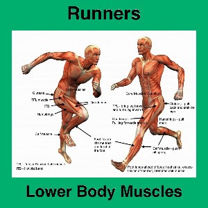Muscles We Need to Focus On to Improve Our Running Goals