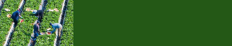 field-strip.jpg