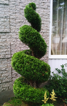 taille en spiral