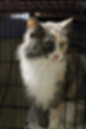 Cat_Bella_GGOH.jpg