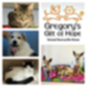 CatsDogsCollage.jpg
