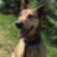 Dog_Chloe2_GGOH.jpg